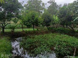 tanah dan kolam di narmada