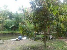 Tanah dan Kolam di Lingsar