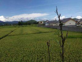 Tanah di By Pass Lombok