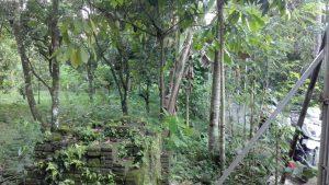 tanah di narmada