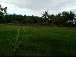 tanah tambak udang