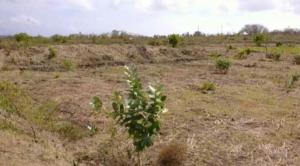tanah lotim